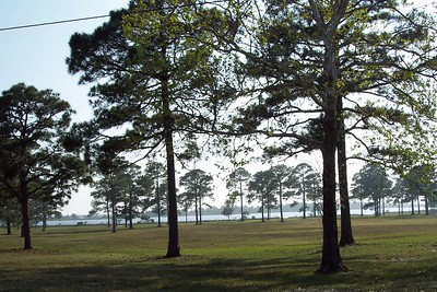 Pines by the Beach
