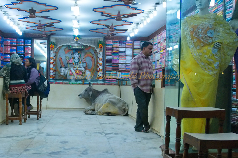 Lucky cow, Lucky vendor in Varanasi, India