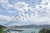 The mid day rush out of Wellington Airport on the 28th of December. This represents about 2 hours of flights in the middle of the day. Each of the 240 exposures is a second apart.