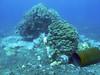 Coral Rubble, Tsunami Debris, Keauhou Bay, Kona, Hawaii