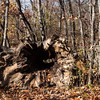 The Inwood Fallen Tree