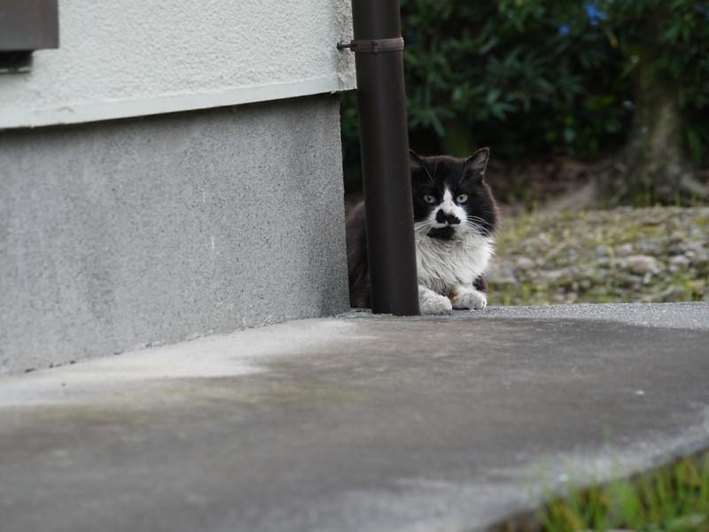 Cat's glance.