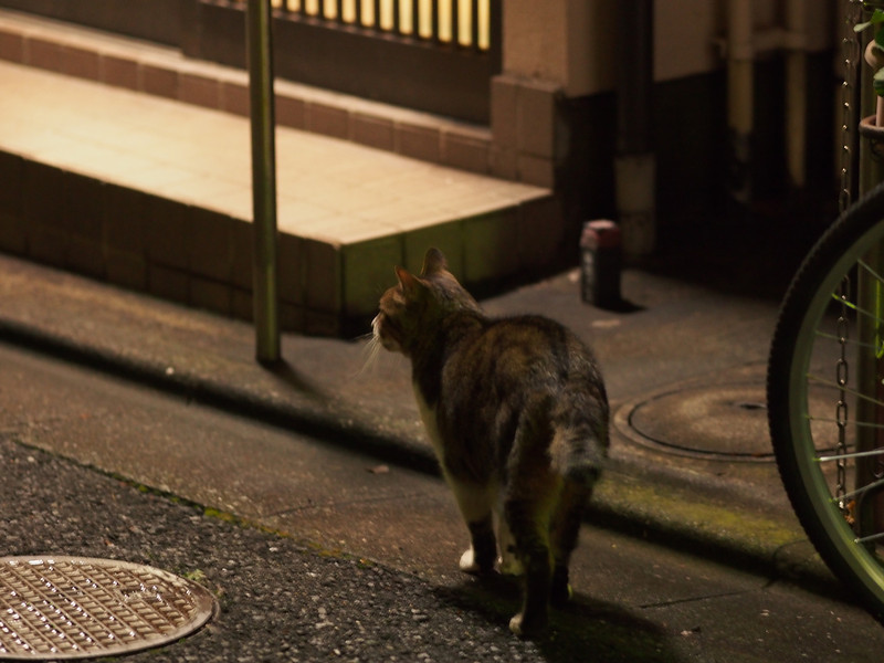 Cat stroll.