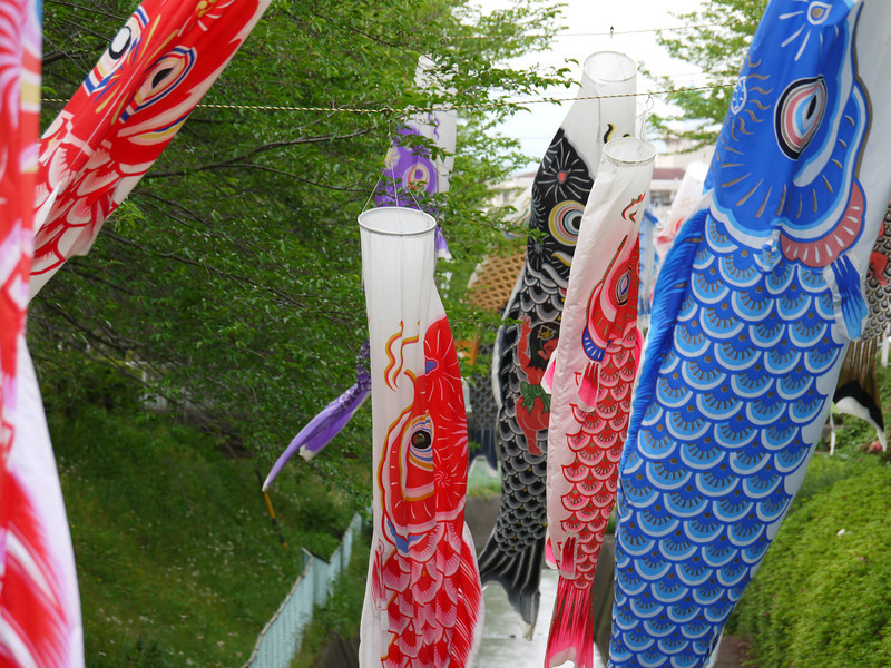 Carp streamers swimming.
