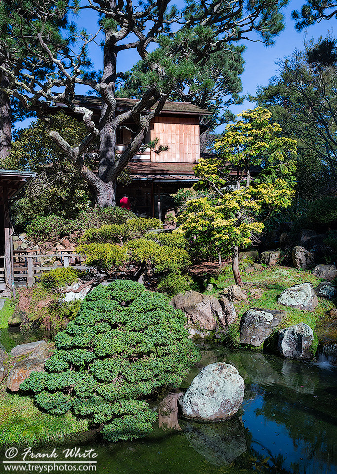 Japanese House gardens in San Francisco