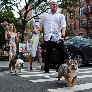 {for Instagram} Two Bulldogs, NYC  (00268)