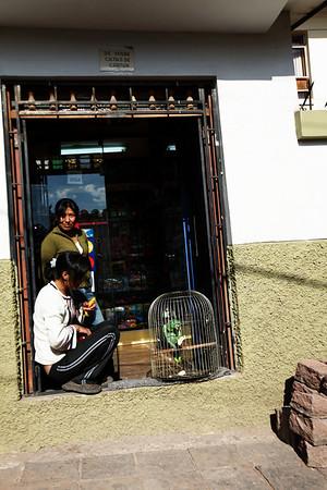 Amazon... - Cusco, Peru<br /> That's like a $3000 bird