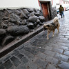 Cusco Dog