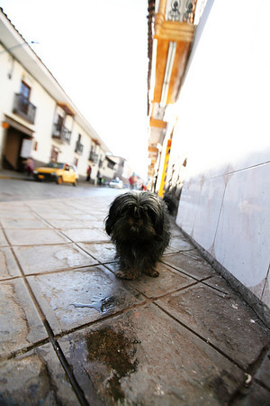 Another dog - Cusco, Peru