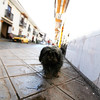 Another dog - Cusco, Peru