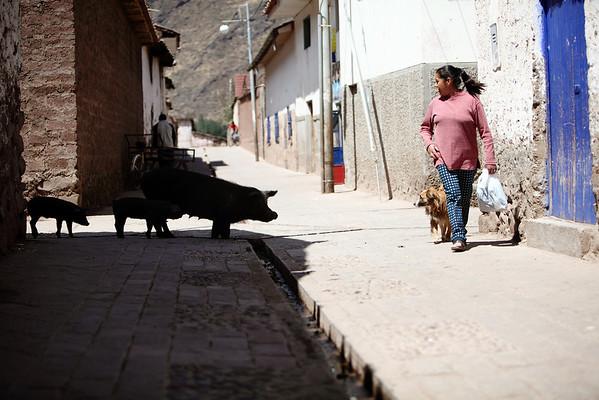 Pigs in Pisac