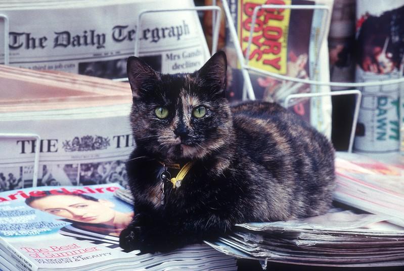 Street Cat on Newsstand