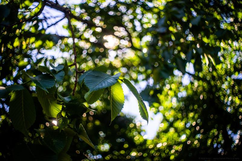 Leafy Bokeh