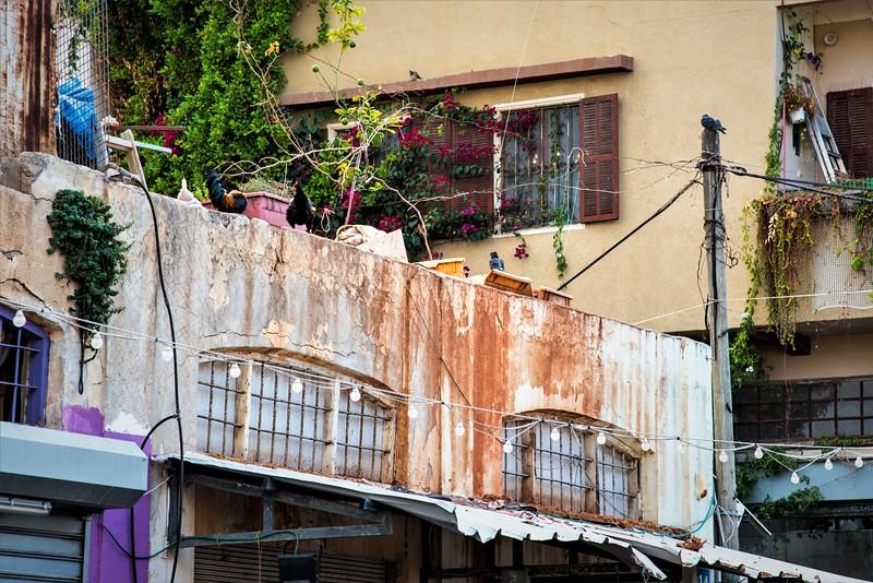 Roosters on street in Tel Aviv