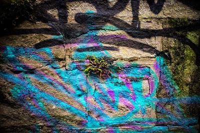 Graffiti Lichen