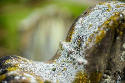 Headstone Lichen