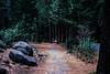 Path Through Yosemite