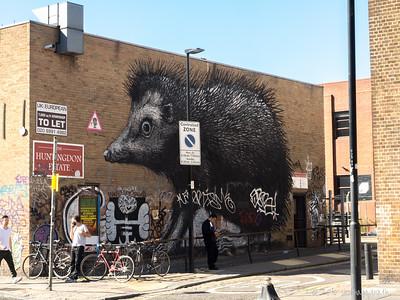 Hedgehog - Roa