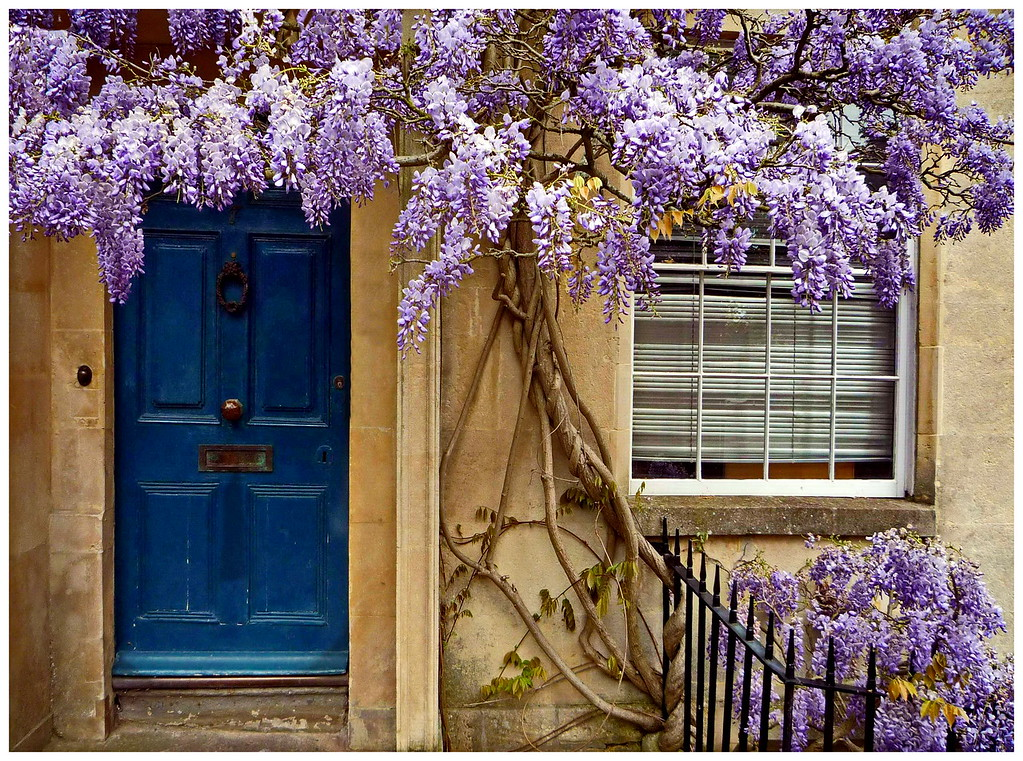 Wisteria and House - Brunswick Street