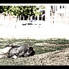 SaritaPhotos-20100417-4129sm
