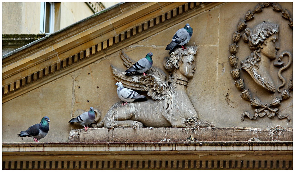 Classical Pigeon Symmetry - Stall Street Bath