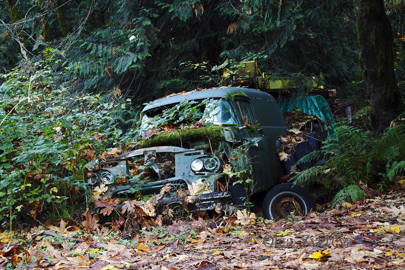 <p>Old car found new home In the forest. Washington, USA</p>