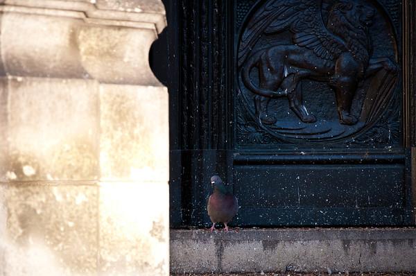 Pidgeon.