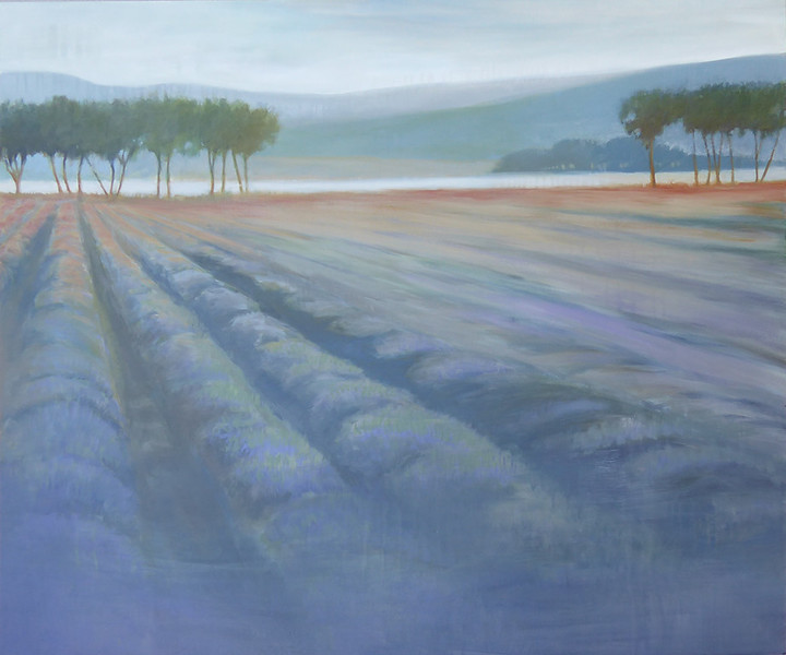 Hazy Fields of Lavender 5060