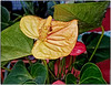 Anthurium Plant and Flower