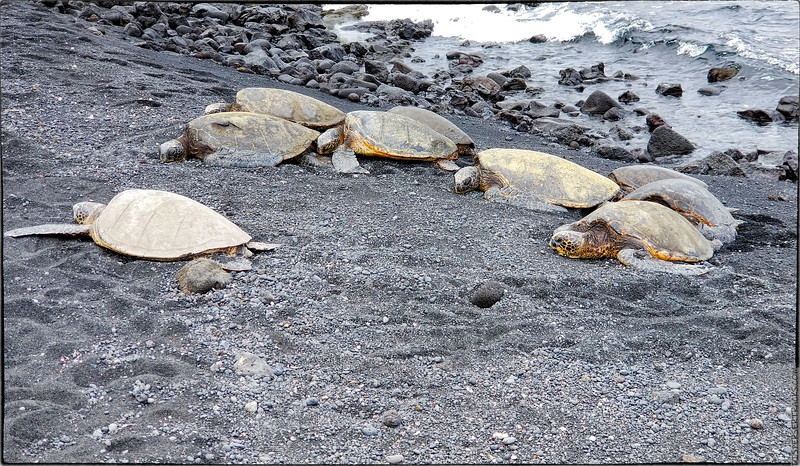 Punaluʻu Beach Park - black sand and turtles