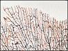 Decorative Sea Plant Skeleton