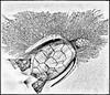 Decorative wood Turtle and sea plant skeleton
