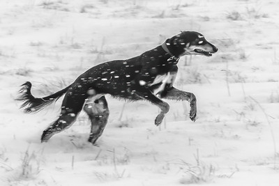 Snow runner_8742-Edit.jpg