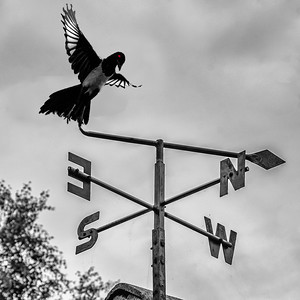 Magpie Weather Vane