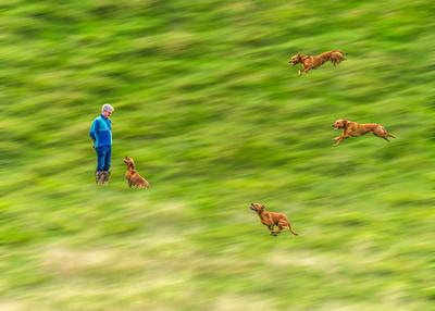 Midge running to Charles 464 473 467 493 _0463 adding blur 2-2.jpg
