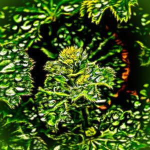 Topaz Leaf Smudge vignette_2733-studio-2.jpg