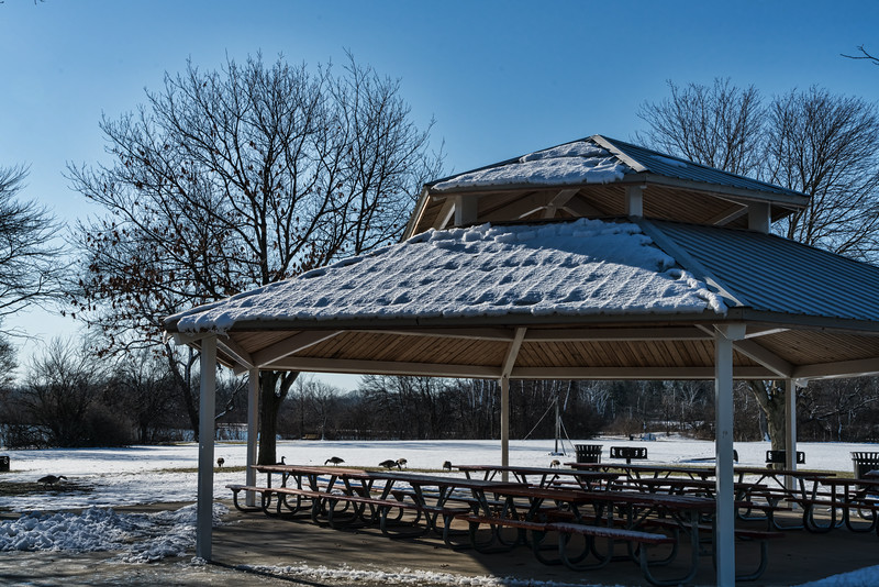 Picnic shelter on a frosty morning, with geese