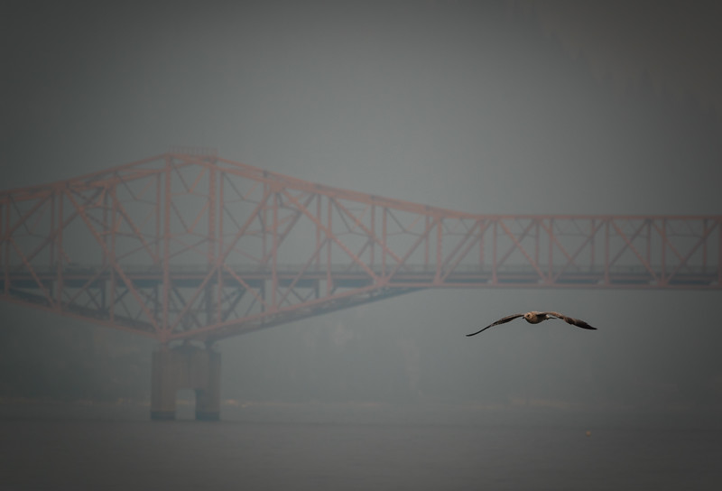 Gull and Bridge