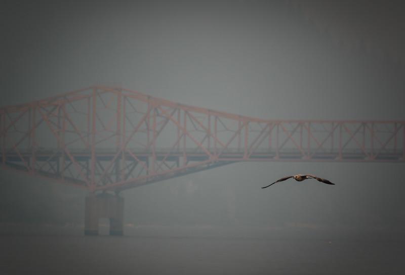 Gull and Bridge