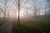 Trees in fog, Kent State University, 3/24/10.