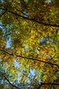 Cypress and oak, 10-29-2013