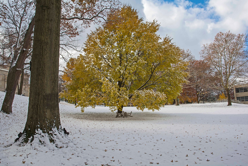 Front Campus in early snow, 11-12-2013