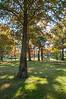 Cypress, 10-29-2013