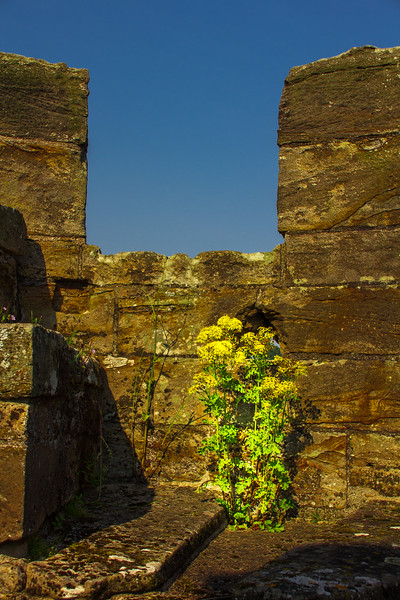 2015-08-23_Scotland_StirlingR_0171