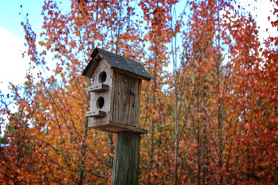 Bird House in Fall