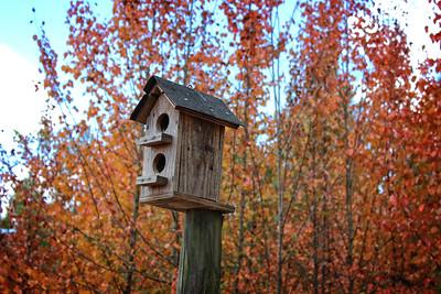 Bird House in Fall