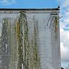 Rewired Moss Wall