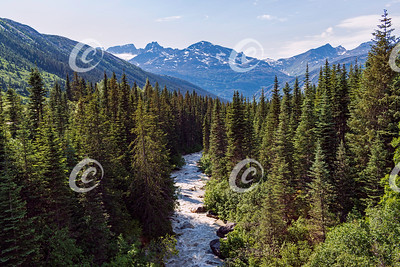 River Running Through the Forest near Skagway Alaska