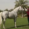 Dostatok, stallion