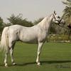 Dilijans, stallion